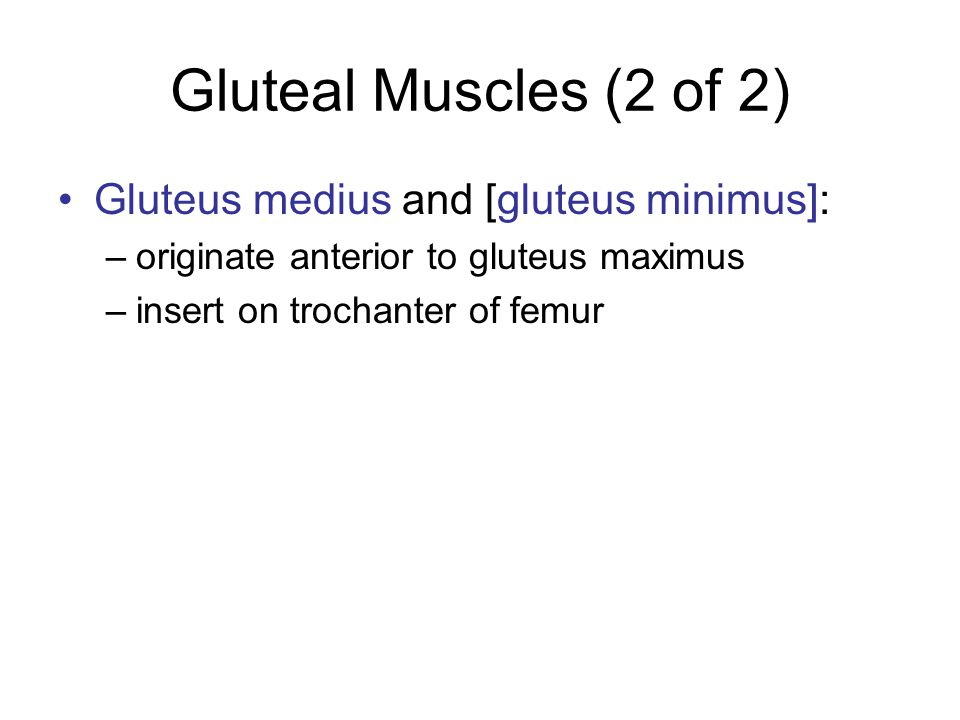 Gluteal Muscles (2 of 2) Gluteus medius and [gluteus minimus]: